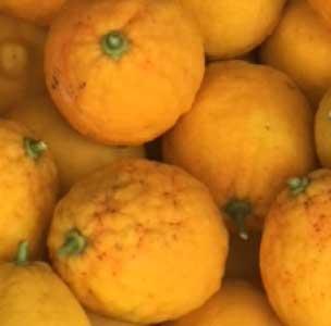 Greka Foods | Authentic Greek Food | Fresh Oranges